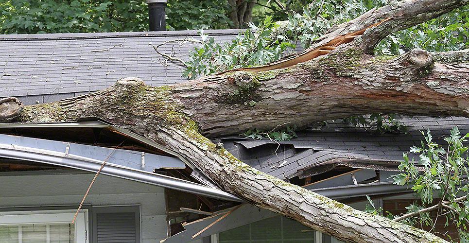 How To Detect Tree Hazards