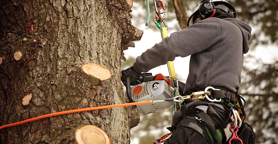 What is the importance of cutting trees?