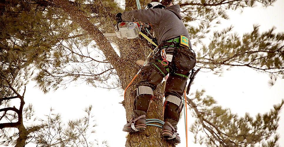 Arborist cutting branch
