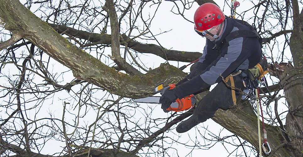Get Rid of DIY Tree Removal and Choose Professional Services